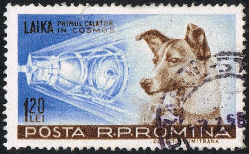Romanian Laika Stamp