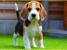15 Sweetest Baby Dogs Every Dog Lover Should See
