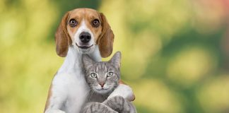 dogs and cats are friends